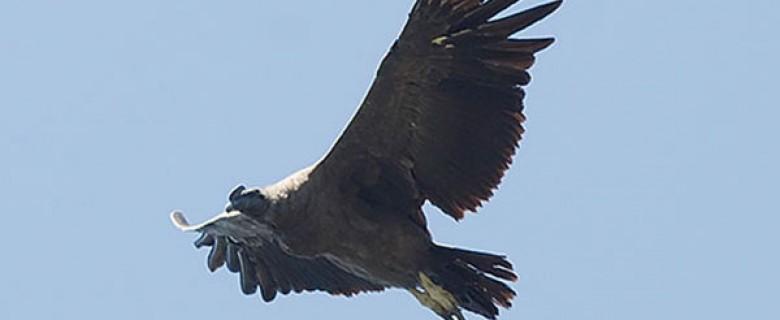 Andean Condor Tour