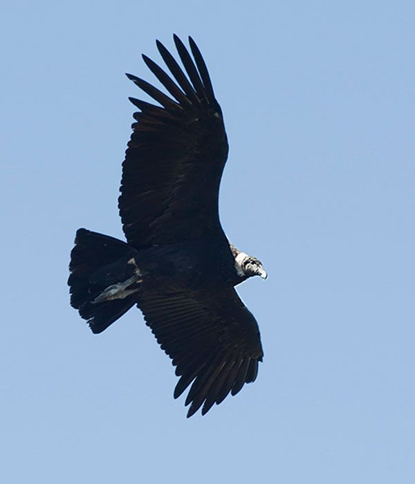 andean-condor-itinerary-day-1