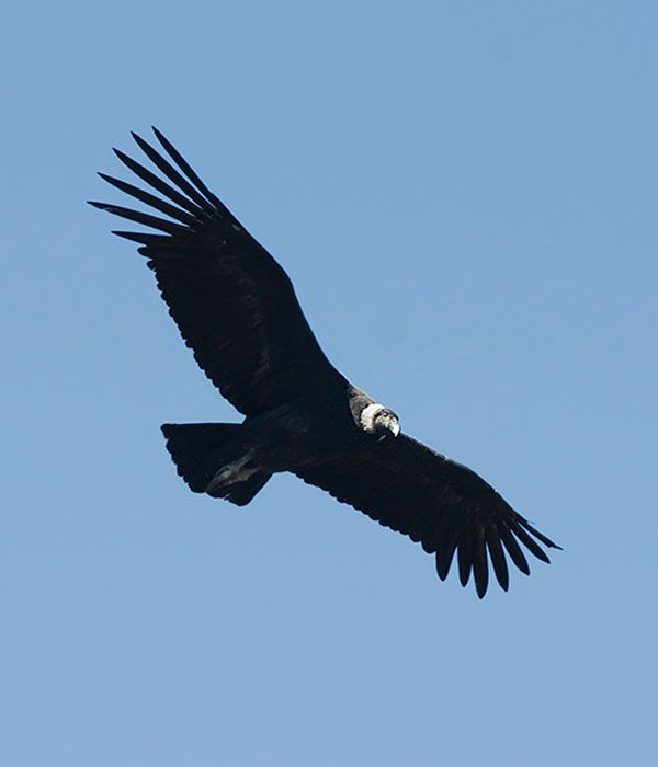 andean-condor-itinerary-day-2