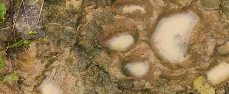 San Miguelito Jaguar Conservation Tour