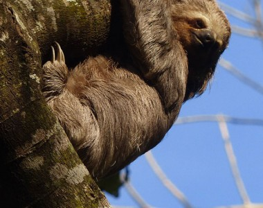 Sloth / Wildlife Tour