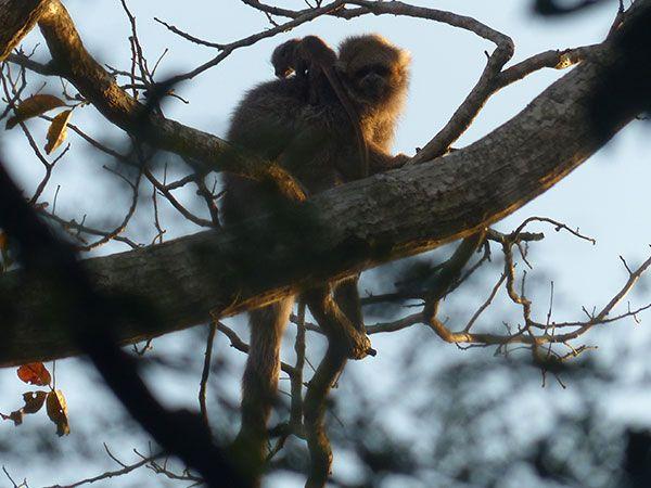 sloth-video