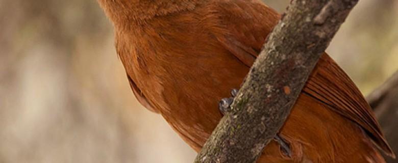 Santa Cruz Full Day Birding Tour