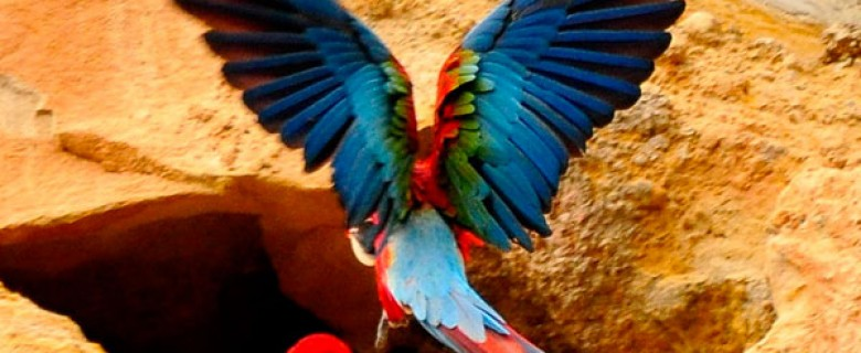 AMAZON RAINFOREST & BOLIVIAN PAMPAS ULTIMATE WILDLIFE ADVENTURE TOUR