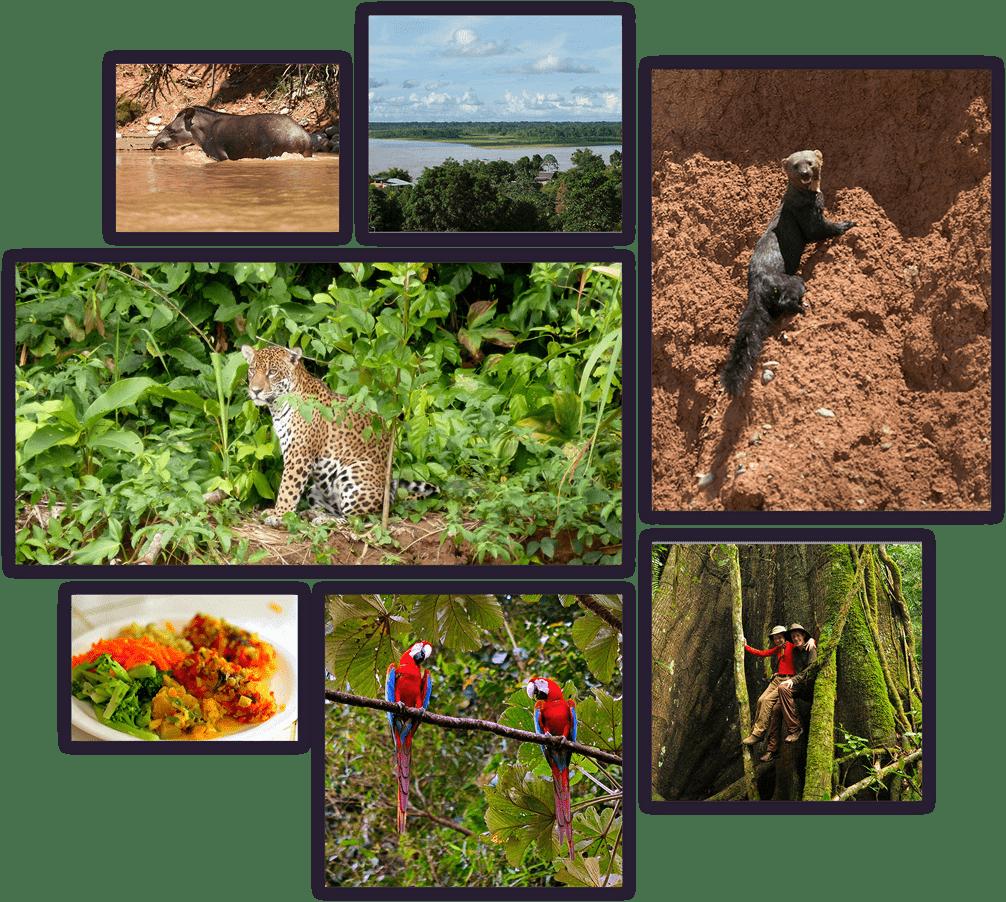 amazon-pampas-summary