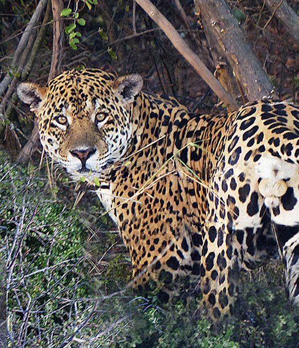 kaa-pantanal-itinerary-day-1