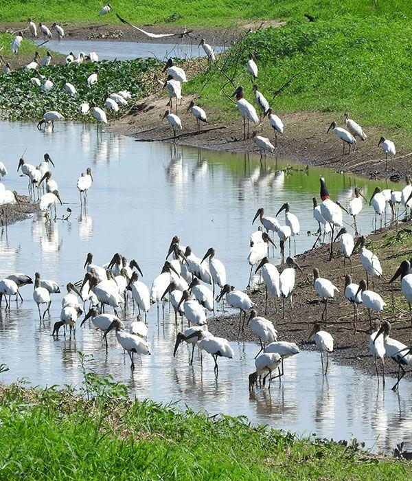 kaa-pantanal-itinerary-day-3