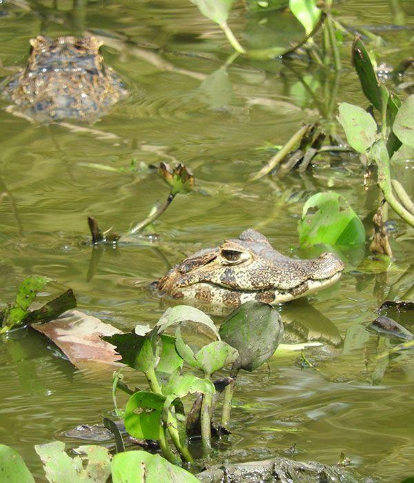 kaa-pantanal-itinerary-day-7