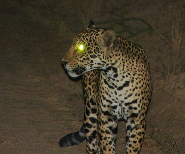 kaa-pantanal-itinerary-night-1
