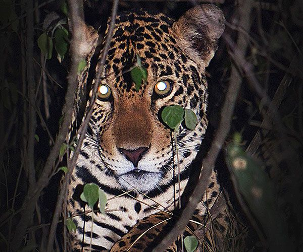 kaa-pantanal-itinerary-night-2