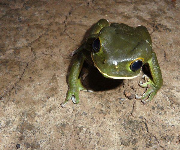 kaa-pantanal-itinerary-night-3