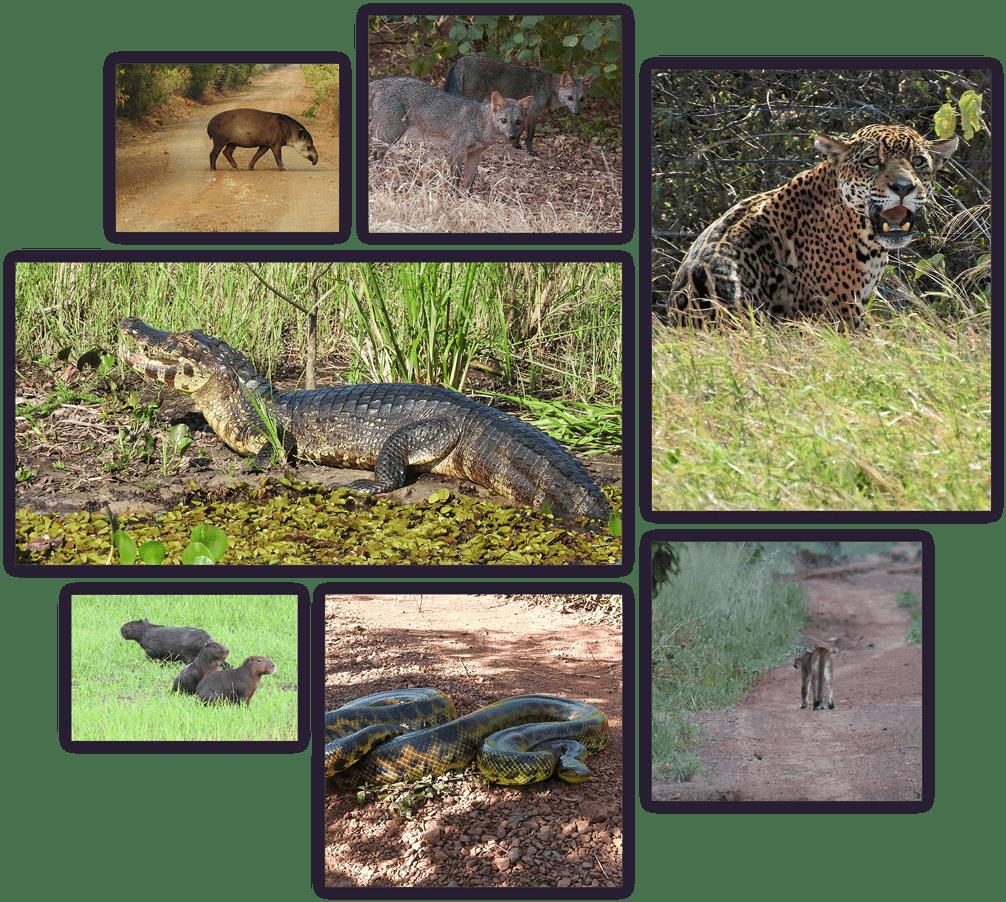 kaa-pantanal-summary-