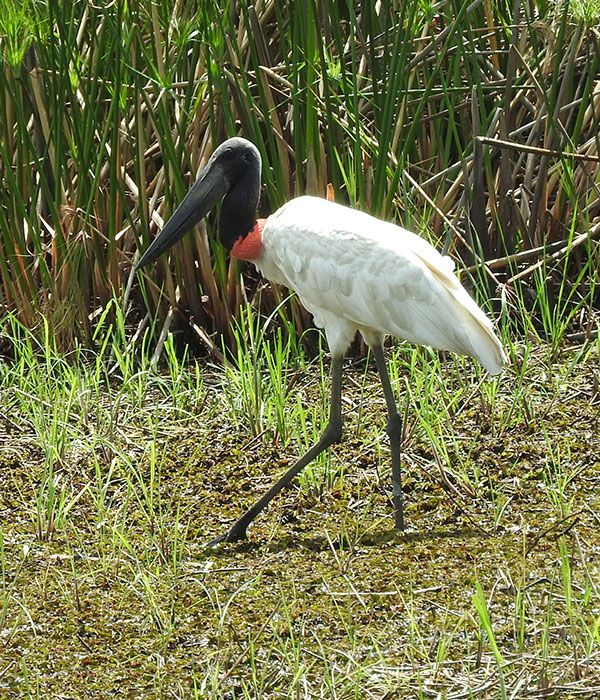 pantanal-itinerary-day-1