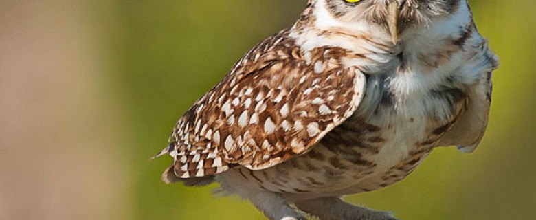 Eastern Bolivia Birding Tour