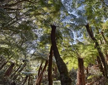 Amboro National Park Giant Fern Trek Day Tour