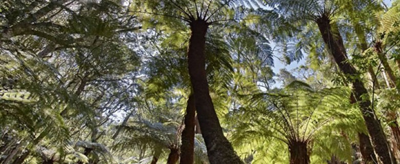 Amboro National Park Giant Fern Trek Day Tour