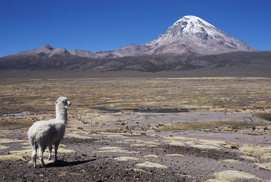 SAJAMA NATIONAL PARK EXPEDITION