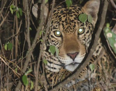 San Miguelito Jaguar Reserve and Pantanal Package