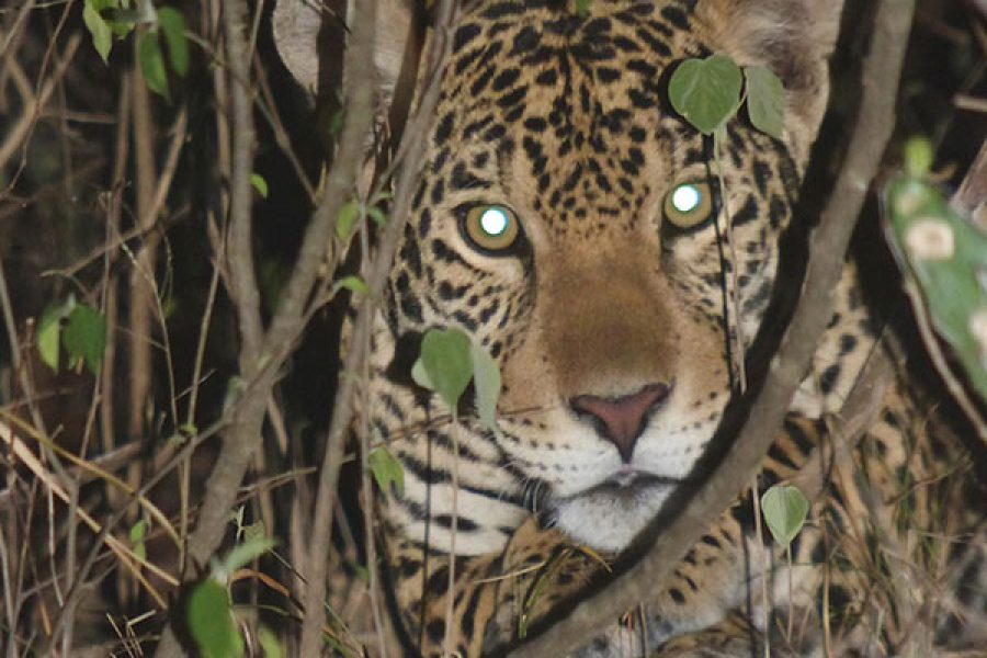 San Miguelito Jaguar Reserve and Pantanal Package