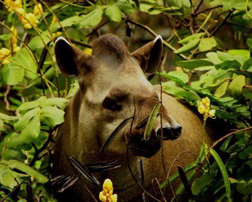 Nicks-pantanal-jaguar-010