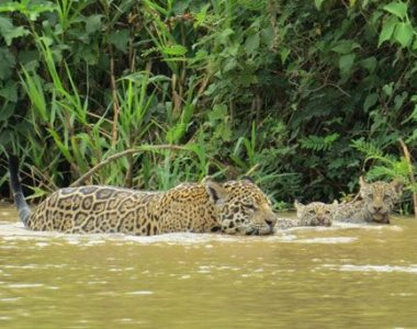 NORTH PANTANAL ULTIMATE WILDLIFE SAFARI PACKAGE<br>7 DAYS/6 NIGHTS